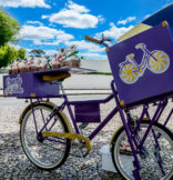 Food Bike Curitiba - Candy Bike